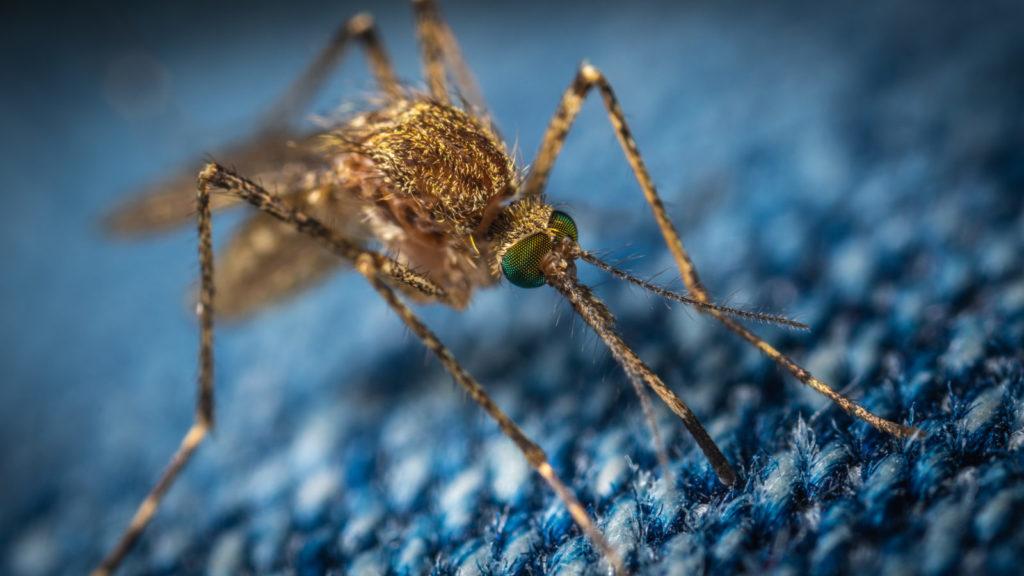 Protect Home - preparat na komary, kleszcze, pluskwy